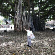 入口近くの大きな木