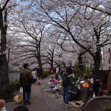 公園の桜が満開で、花見をする人たちでにぎわっていた