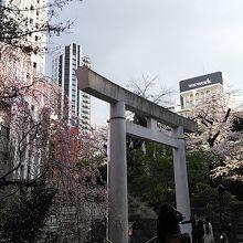 桜が少し ありました