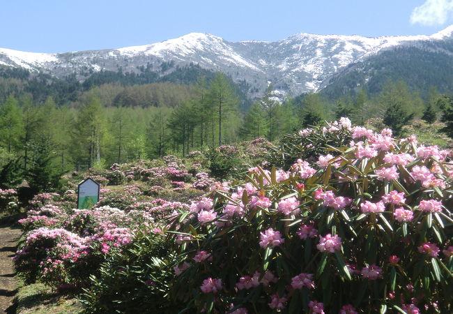 東京ドーム10個分に広さの花畑に感動 眺望も最高