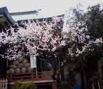 千住本氷川神社