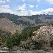 桜の見頃にはひとあし早かった!