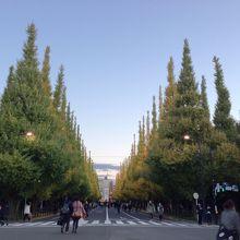 外苑イチョウ並木の景色