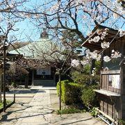 桜の参道が風情ある