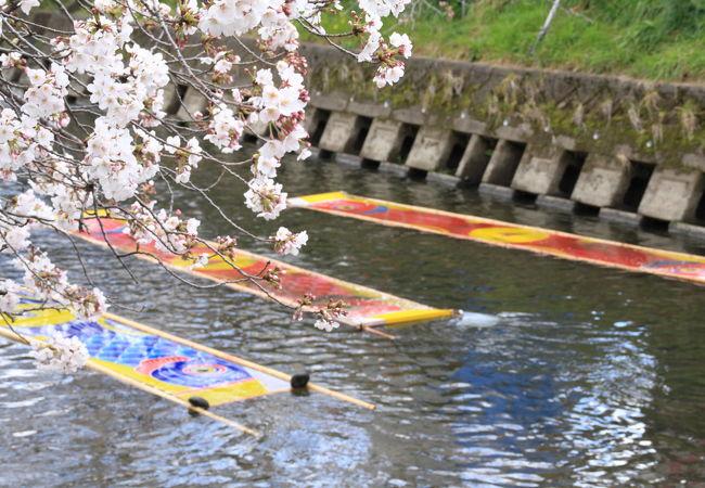 愛知の桜の名所と言えば「五条川」の「のんぼり洗い」