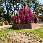 南国宮崎ぴったりの植物園