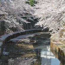 両岸に桜並木があります。
