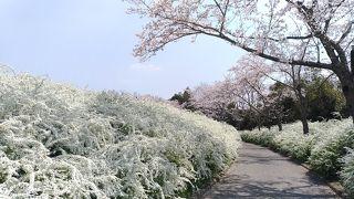 愛知県緑化センター 昭和の森
