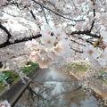 岩倉桜まつり見学に便利