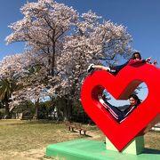桜満開の城山公園!鳥羽のロゴで写真