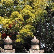 福岡藩主黒田家墓所 (東長寺)