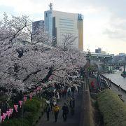 桜の名所の1つ