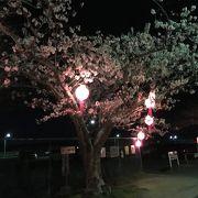 名張桜まつり