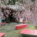 写真:花の茶屋
