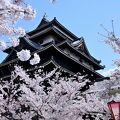 春は漆黒の国宝天守が桜花で彩られます♪