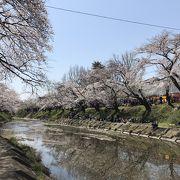 東海地区有数の桜並木