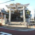 写真:白山神社の大ケヤキ