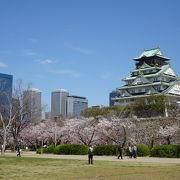 有料エリア。桜が綺麗