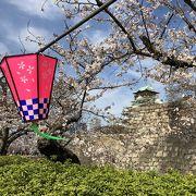 ゆっくりと大阪城の桜を楽しめる