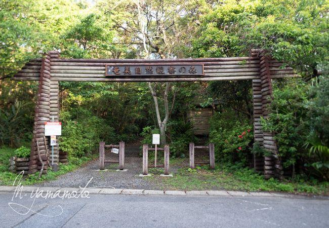 奄美自然観察の森