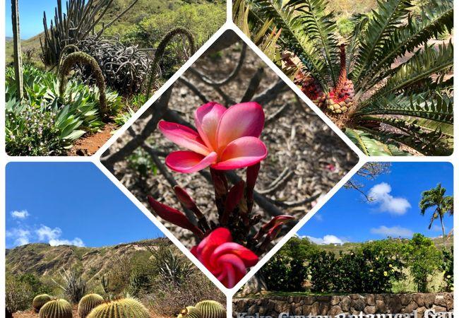 ココ クレーター植物園