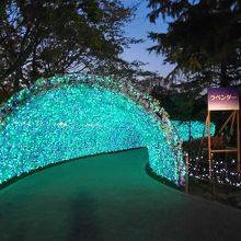 光のトンネル ラベンダー