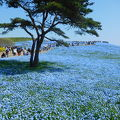 青一色の世界とフルカラーの世界