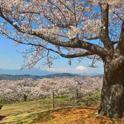 桜の季節も絶景