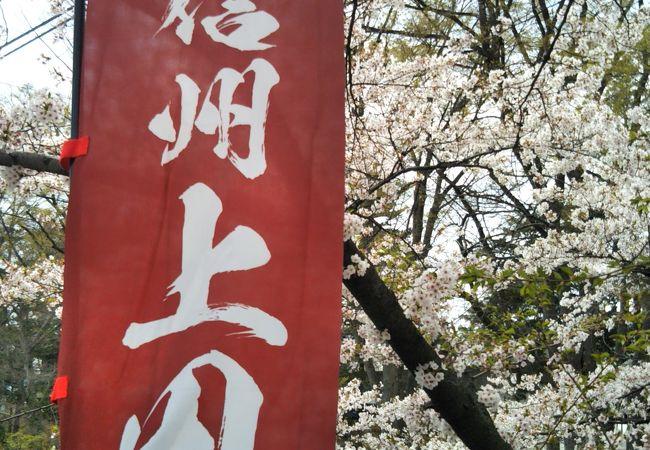 城址のしだれ桜が雰囲気を盛り上げて~