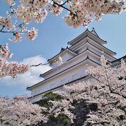 満開の桜は何回見ても飽きない