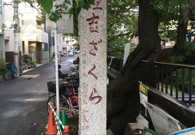 渋川沿いに植えられたソメイヨシノを記念する碑です。
