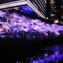 桜並木のライトアップが綺麗に見られました