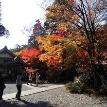 秋の紅葉がきれいな神社です。