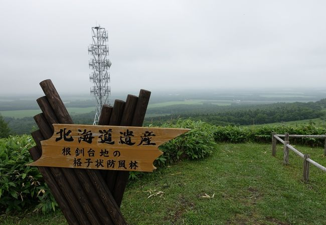 根釧台地の格子状防風林