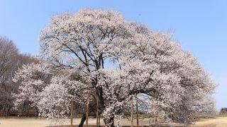 天平の花まつり