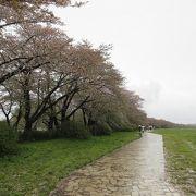 桜は2分ほどしか残っていませんでした