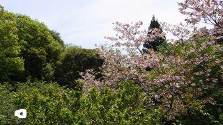 森林総合研究所多摩森林科学園