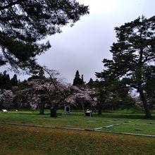 桜が咲いています