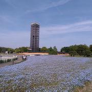 広い公園で年中いろいろな花を楽しめます