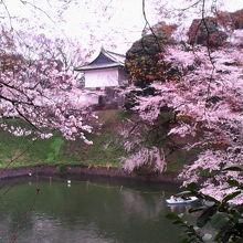 桜越しに田安門や櫓などを撮影できる花見スポット