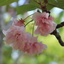 武蔵丘陵森林公園内花木園