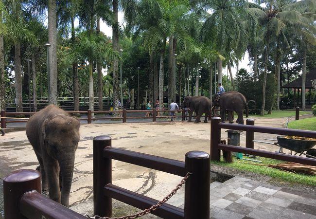 象の背中は固かった