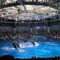 魚と光が芸術的なステキな水族館でした