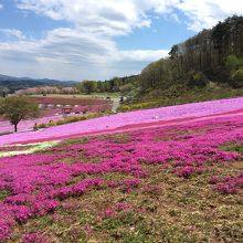 ジュピアランドひらた 芝桜まつり