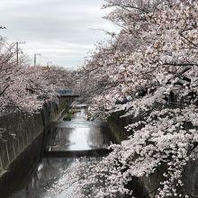 桜並木が美しかった。