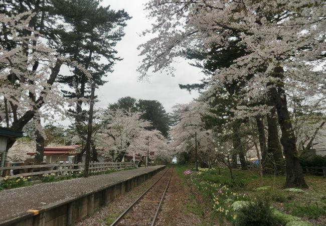 桜と電車の光景が端子そう