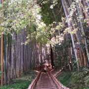 佐倉の武家屋敷を見た後に風流な気分で散歩できる竹林