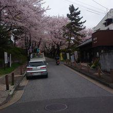 春の桜は見事