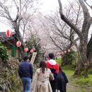 三多気桜まつり