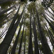 竹を見ながら過ごす静かな時間